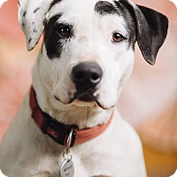 Adopt A Pet :: Halle - Portland, OR