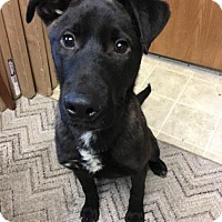 Adopt A Pet :: John Wayne - Chicago Heights, IL