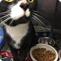 Adopt A Pet :: Maggie - Fall River, MA