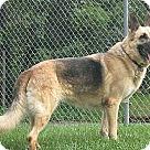 Adopt A Pet :: Chelsea