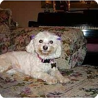 Adopt A Pet :: Lady - La Costa, CA
