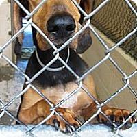 Adopt A Pet :: Luke URGENT needs foster - Sacramento, CA