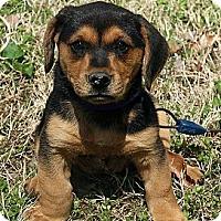 Adopt A Pet :: Effie - Staunton, VA