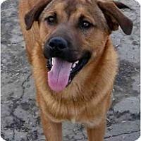 Adopt A Pet :: Neko - Fowler, CA