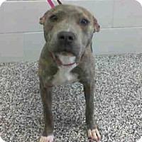 Adopt A Pet :: Misty - Sacramento, CA