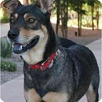 Adopt A Pet :: MARTHA - Gilbert, AZ