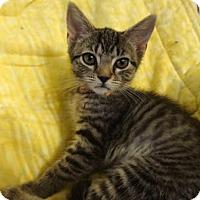 Adopt A Pet :: Lucy - Colmar, PA