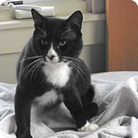 Adopt A Pet :: Caviar - Berkeley, CA