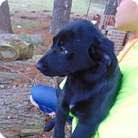 Adopt A Pet :: Alissa - Greeneville, TN