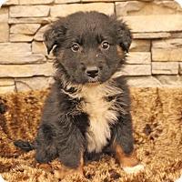 Adopt A Pet :: Aqua - Waldorf, MD