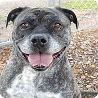Adopt A Pet :: AMBER - Upland, CA