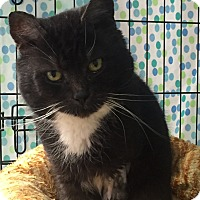 Adopt A Pet :: Zeus - Warwick, RI