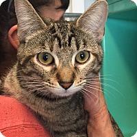 Adopt A Pet :: MADISON - Cliffside Park, NJ