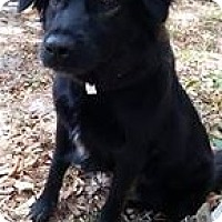 Adopt A Pet :: Ginger - Gainesville, FL