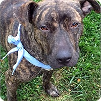 Adopt A Pet :: Isla (Gem) - Alexandria, VA