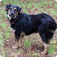 Adopt A Pet :: Trudie - Bedminster, NJ