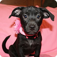 Adopt A Pet :: Jenny (has been adopted) - Rochester, NY
