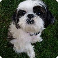 Adopt A Pet :: Christi Montgomery - Urbana, OH