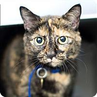Adopt A Pet :: Mika - San Luis Obispo, CA