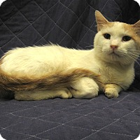 Adopt A Pet :: Crisko - Redwood Falls, MN