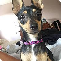 Adopt A Pet :: Sophia - Rancho Cucamonga, CA