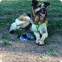 Adopt A Pet :: Zena - Aurora, OH