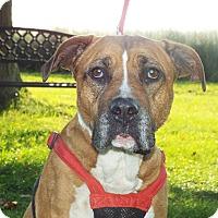 Adopt A Pet :: Sox - Shelby, MI
