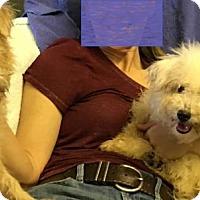 Adopt A Pet :: 'GINGER' - Agoura Hills, CA