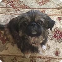 Adopt A Pet :: Ivanka - Santa Fe, TX