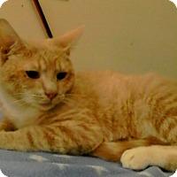 Adopt A Pet :: Posh - Trevose, PA