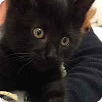 Adopt A Pet :: Esmeralda - Great Neck, NY