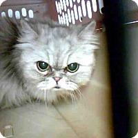 Adopt A Pet :: FOOFY - Conroe, TX
