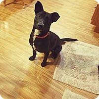 Adopt A Pet :: Louie - Channahon, IL