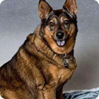 Adopt A Pet :: TATOR - Albany, NY