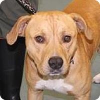 Adopt A Pet :: MORRIS - Media, PA