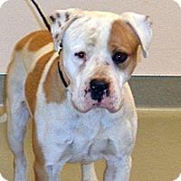 Adopt A Pet :: Bronco - Wildomar, CA