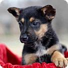 Adopt A Pet :: PUPPY LUNA
