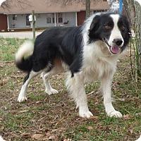 Adopt A Pet :: Bobby - Bedminster, NJ