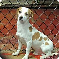 Adopt A Pet :: Barkley - Houston, TX