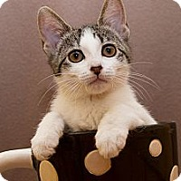 Adopt A Pet :: Opal - Irvine, CA