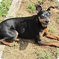 Adopt A Pet :: Jamie - Malaga, NJ