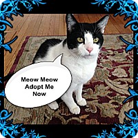 Adopt A Pet :: PeeWee - Rochester, NY