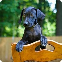 Adopt A Pet :: Zola - Bradenton, FL