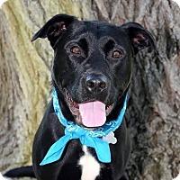 Adopt A Pet :: Harley - Davison, MI