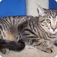 Adopt A Pet :: K-Stella3-Sol - Colorado Springs, CO