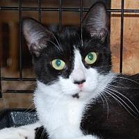 Adopt A Pet :: Toast - Alpharetta, GA