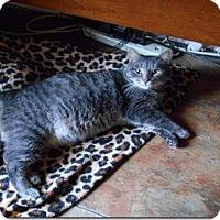 Adopt A Pet :: Rigby - courtesy listing - Sparta, NJ