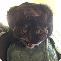 Adopt A Pet :: Brenda - Bentonville, AR