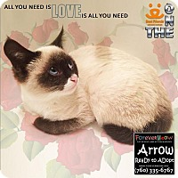 Adopt A Pet :: Arrow - Palm Desert, CA
