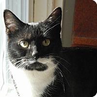 Adopt A Pet :: Libby - Winchendon, MA